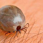 Carrapatos: doenças e proteção para seu animal doméstico