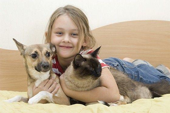 Alimentos que Fazem Mal a Seu Animal - Alimentos Proibidos Para Cães e Gatos