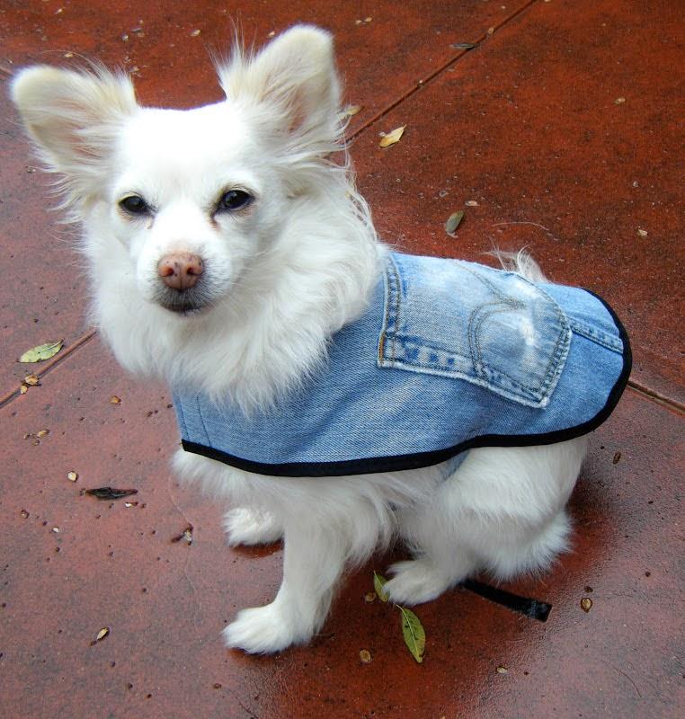 Como fazer roupa para cachorro com calça jeans