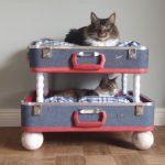 Camas para Cães e Gatos Super Inovadoras