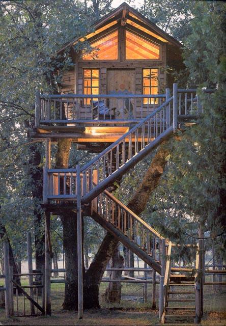 fotos de casa na árvore