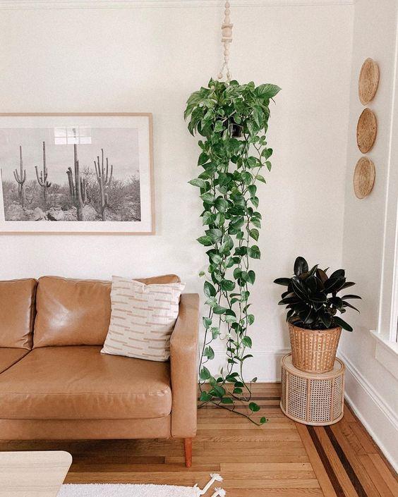 decoração de sala com plantas