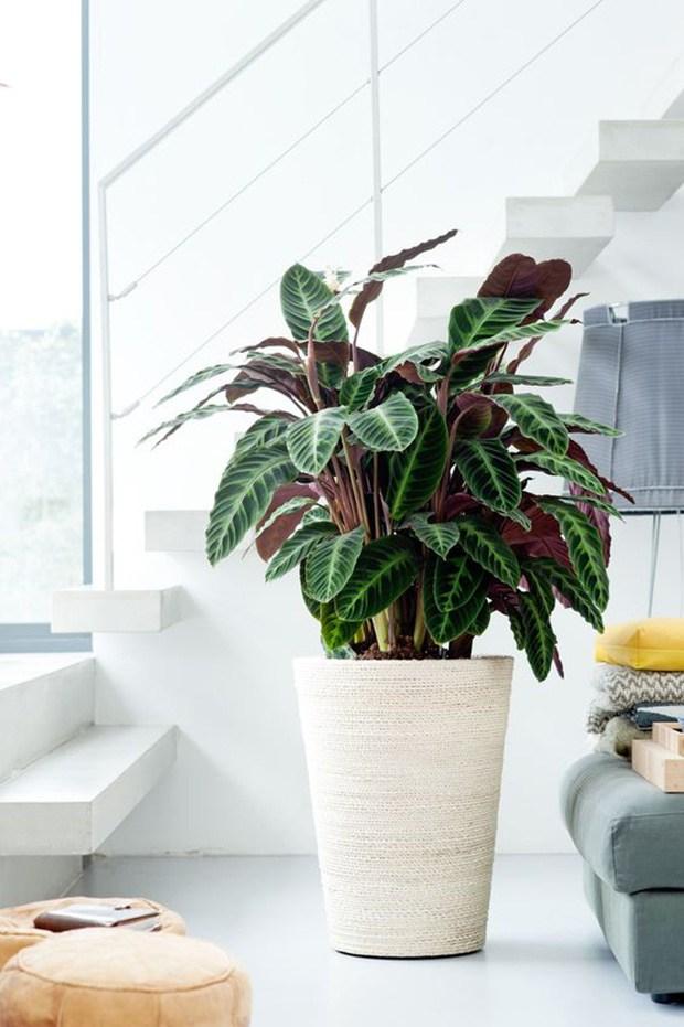planta em vaso grande